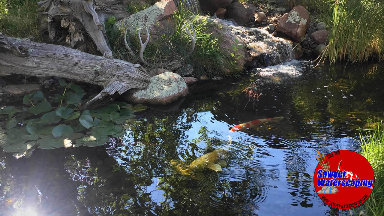 Sawyer Waterscaping Lily Pond 8x10