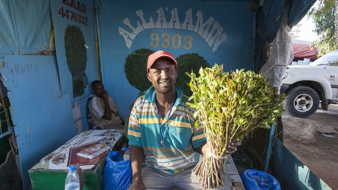 Photos: New member in family of nations? A man purchases a bundle of the narcotic plant khat, which is hugely popular in Hargeisa.