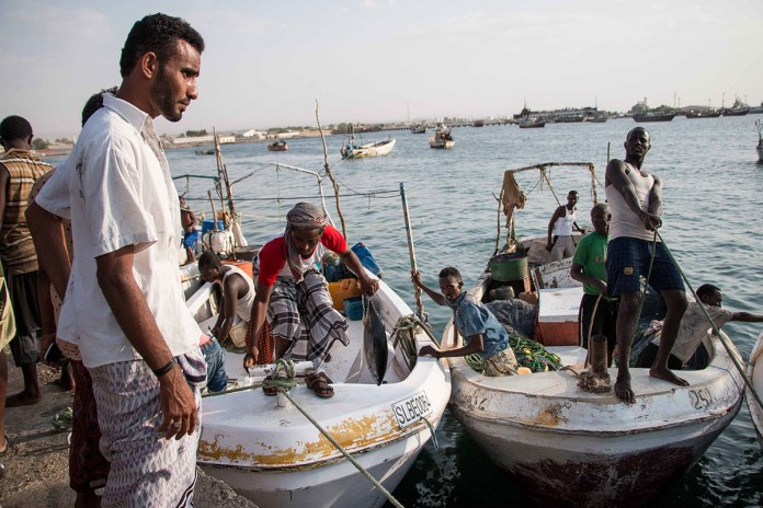 Somali And Yemeni Fishermen Bring Their Day'S Catch Ashore By Hand. Fishermen In Berbera Are Uncertain How The Port Expansion Deal Will Benefit Them And Whether There Will Be Increased Investment In Somaliland Fisheries. [Ashley Hamer/Al Jazeera]