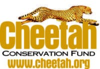These two cheetah cubs, kept in appalling conditions, were confiscated in Somaliland © Cheetah Conservation Fund