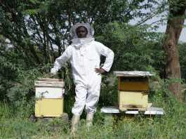 Money From Honey The Success Story Of Hassan, A Beekeeper In Somaliland