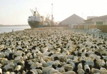 Saudi Arabia Bans Livestock Imports From Sudan And Djibouti