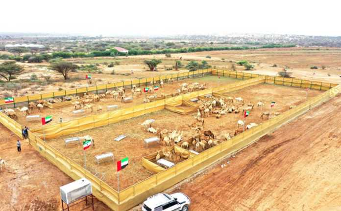 Somaliland And UAE Form Partnership To Increase Camel Milk Production