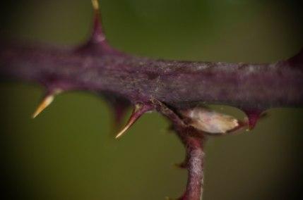 wild plant1 (1 of 1)