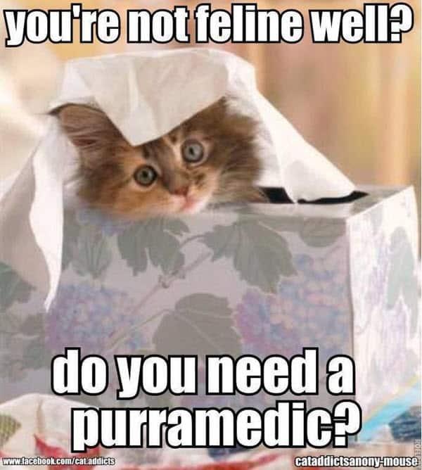 get well soon youre not feline well meme