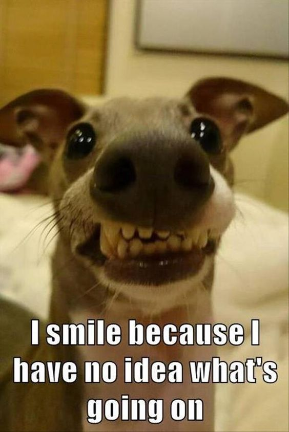 Image of: Pics Smile Sayingimagescom 30 Funny Animal Memes Youll Be So Glad To See Sayingimagescom