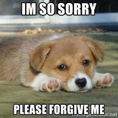 im so sorry forgive me meme