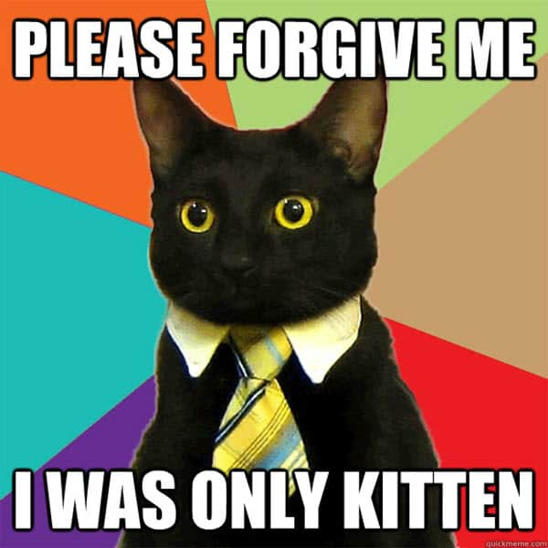 im sorry kitten meme