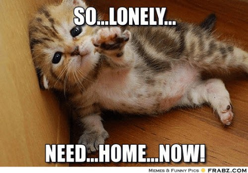lonely need home now meme