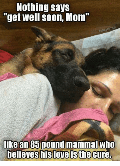 40 Humorous Get Effectively Quickly Memes To Cheer Up Your Pricey One