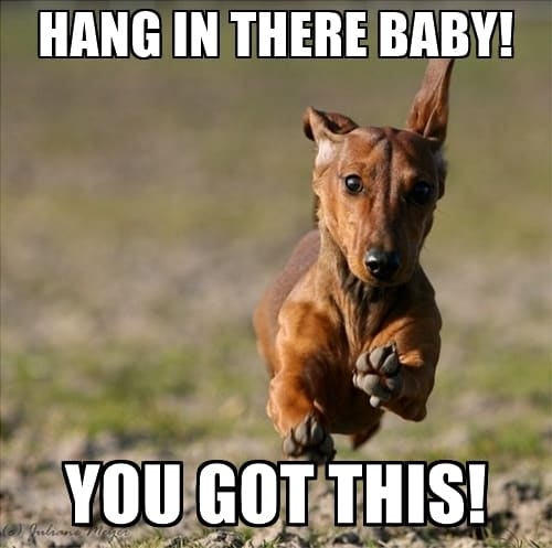 20 Hang In There Meme To Motivate You | SayingImages.com