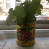 The Tomato Bucket List