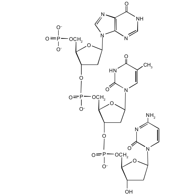 Nucleic Acid Structure