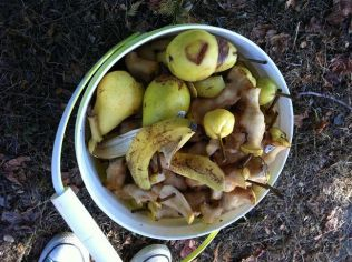 Secondary School fruit program hands out fruits every two weeks. Perfectly edible uneaten food end up in the compost buckets all the time.