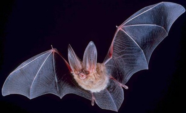 Bats may not dislike forest fires
