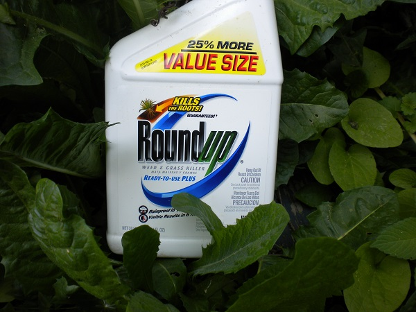 Roundup is reportedly dangerous to human body