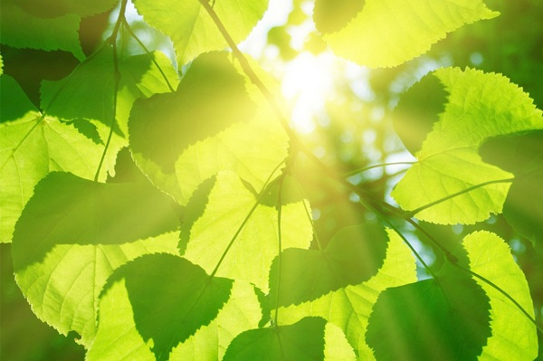 Producing electricity from plants (Credit: Shutterstock)