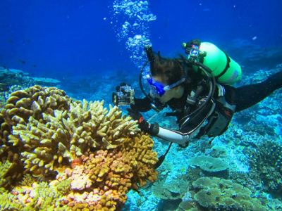 Yan Wei Lim, SDSU graduate student and author on the paper, exploring corals in the southern Line (Photo Credit: Rob Edwards)