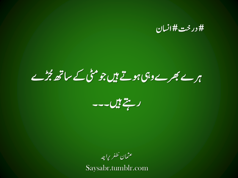 "#darakht #insaan Haray bharay wohi hotay hain jo mitti kay saath jurray rehtay hain…  NB. Get eBook of Usman Zafar Paracha's quotations in Urdu – ""میرے خیالات"" - http://amzn.to/29gFPKD Join Usman on Facebook - https://www.facebook.com/usmanzparacha"