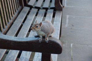 Squirrel at St Paul's Cathedral in London