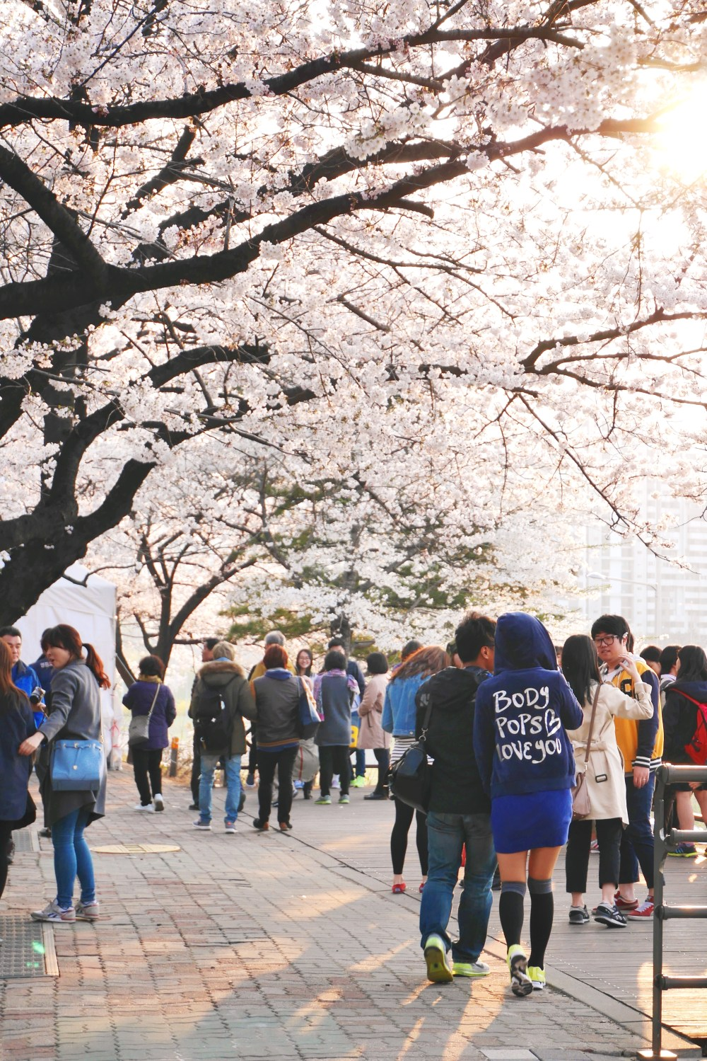 Spring in Yeouido Park (2015)