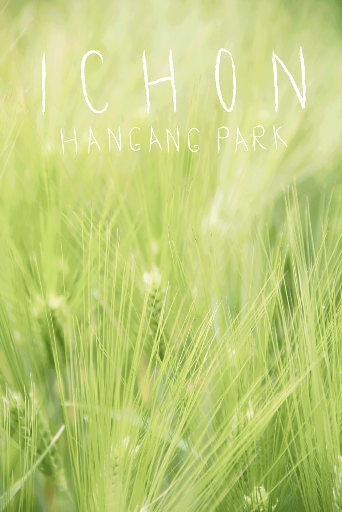 Illustration on Photograph | Ichon Hangang Park Seoul South Korea