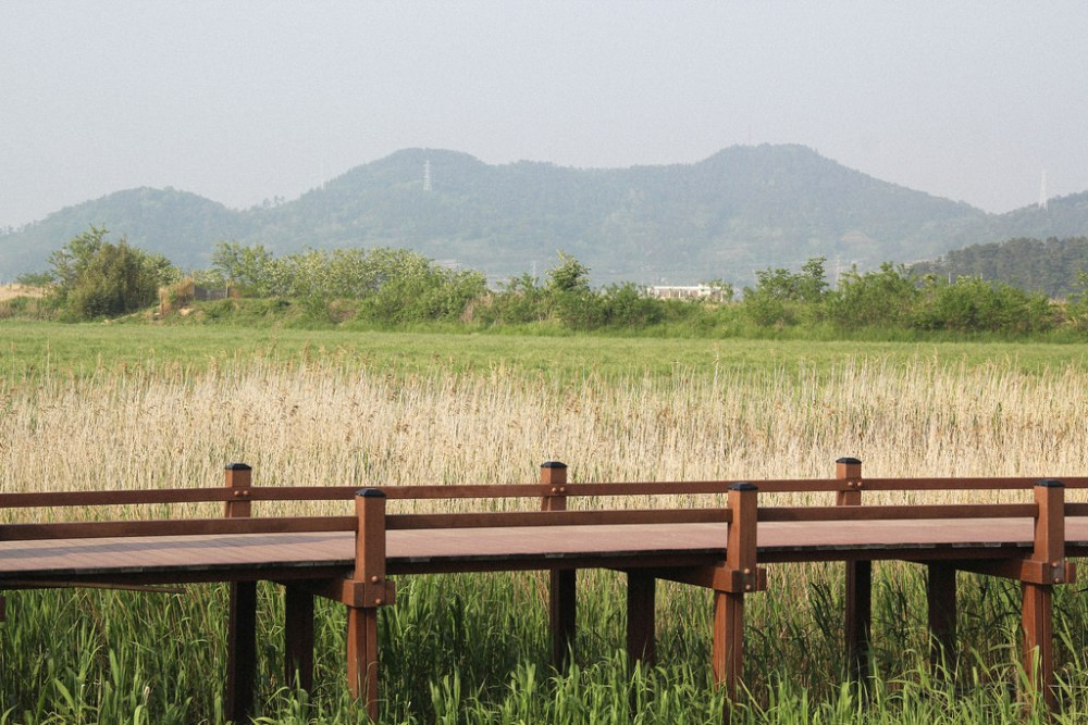Suncheonman Bay Wetland Reserve, South Korea.