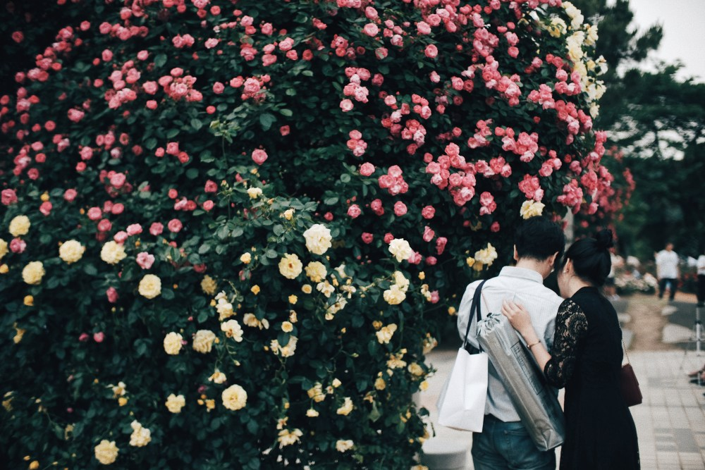 Photographer | Seoul Grand Park Rose Festival 2018 South Korea