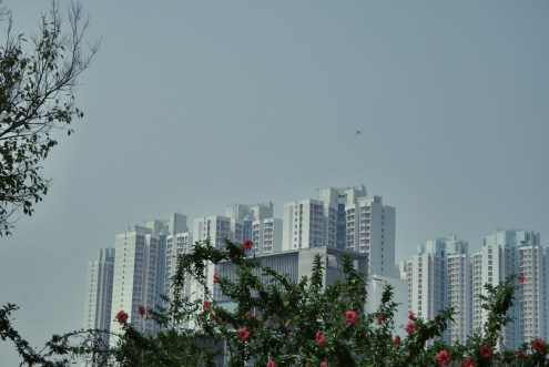 View along Ping Shan Heritage Trail.