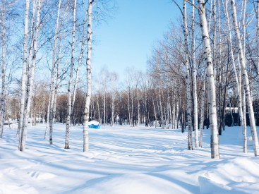 Freelance Travel Photographer | Furano Hokkaido Japan