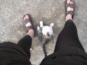 Cat'neathFeet