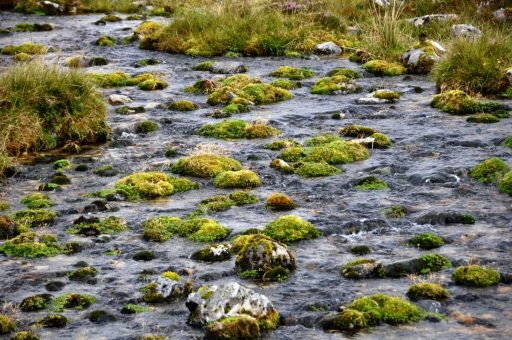 West Highland Way landscape