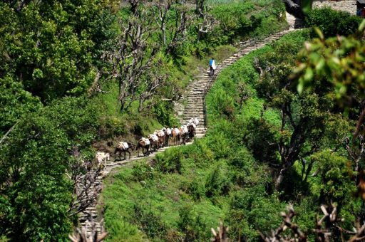 Mule train in the Annapurna Mountains