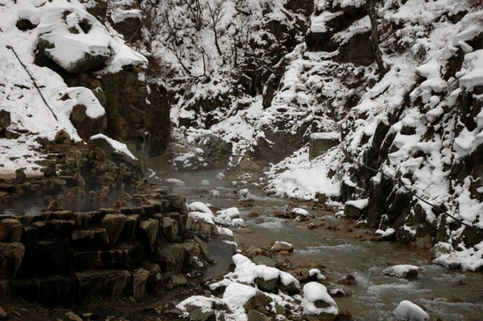 Yudanaka snow monkeys in hot spring