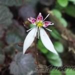 ちょっと息抜きでぶらりさんぽ ~目的の花を目指して~【oyageeの植物観察日記】