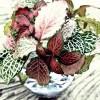 フィットニアの緑、ピンク、赤、3色揃ってビンゴ !? 初めてで、しかも時期的に遅いけど、水挿しでとりあえず根を出させます!【oyageeの植物観察日記】