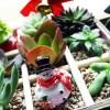 チャレンジ企画「多肉のミニ寄せ植えをX'mas ver.に!」|イブの夜は寄せ植えでも単体鉢でもない、いつもよりちょい豪華に見える「松花堂弁当風寄せ植え」で!【oyageeの植物観察日記】