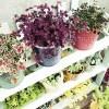 植物の為のDIY – vol.6 -|昨日の100均すのこ棚、ペンキを塗れば完成です! ペンキは、落ち着いた色の「モスグリーン」をチョイス!
