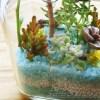 ちっちゃなボトルに植物を植える「テラリウム」にチャレンジ! 2018年、新年早々から飛ばし過ぎですか?【oyageeの植物観察日記】