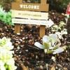 「庭がなくったって、ガーデニングできちゃう!?」 …ってことで、即席プチプチガーデン、誕生! ようこそ、「MY LITTLE GARDEN」へ!【oyageeの植物観察日記】