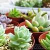 植物の為のDIY – vol.10 –|既製品の2段式縁台を組み立てて、多肉植物専用棚にしてみよう!