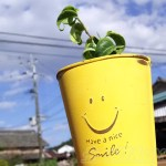 ダイソーのミニ観葉を100均グッズで楽しもう vol.18|葉が丸まったベンジャミンは、スマイリー缶と合わせて、毎日笑顔でほっこりと!【oyageeの植物観察日記】