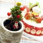 まだ間に合うか? 「永遠のテーマ」である、あの木でクリスマスツリーを作ってみたが、オーナメントの方がまだデカかった…【oyageeの植物観察日記】