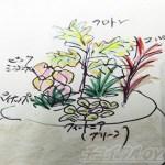 「夏の寄せ植え2020」に挑戦! 植え込む前に、ヒラメキや直感が苦手な人は、まずはイラストでイメージトレーニング?【oyageeの植物観察日記】