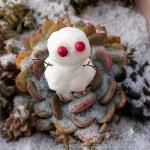 男の箱庭シリーズvol.11 「円盤型多肉のUFOに乗って、雪だるまみたいなE.T.がやってきた!?【oyageeの植物観察日記】