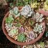 Tanick Land、2つ目に紹介するエリアは「〇〇ガーデン」? 〇〇だけを集めた庭園は、「君はアレより美しい」?【oyageeの植物観察日記】