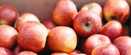 Picnic apples-r