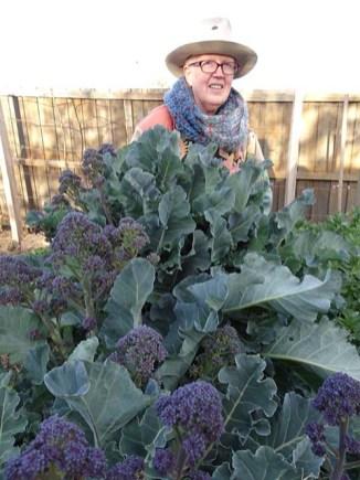 Purple Sprouting Broccoli - 2