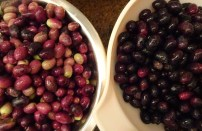 Ross's Olives - Sorted - 1