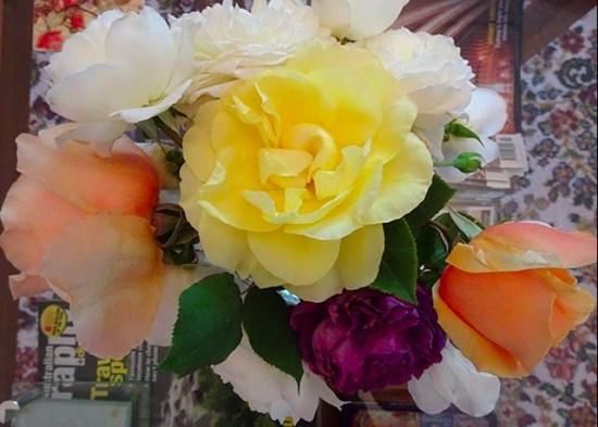 Roses-r-2862128055-1510019600136.jpg